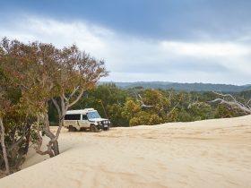 Pemberton Discovery Tours, Pemberton, Western Australia