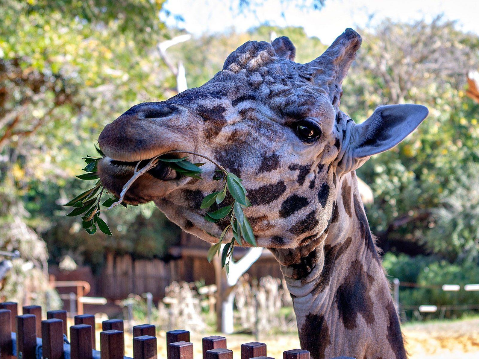 Perth Zoo, South Perth, Western Australia