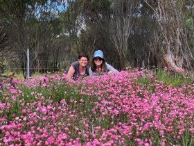 Perths Tiny Tours, Perth, Western Australia