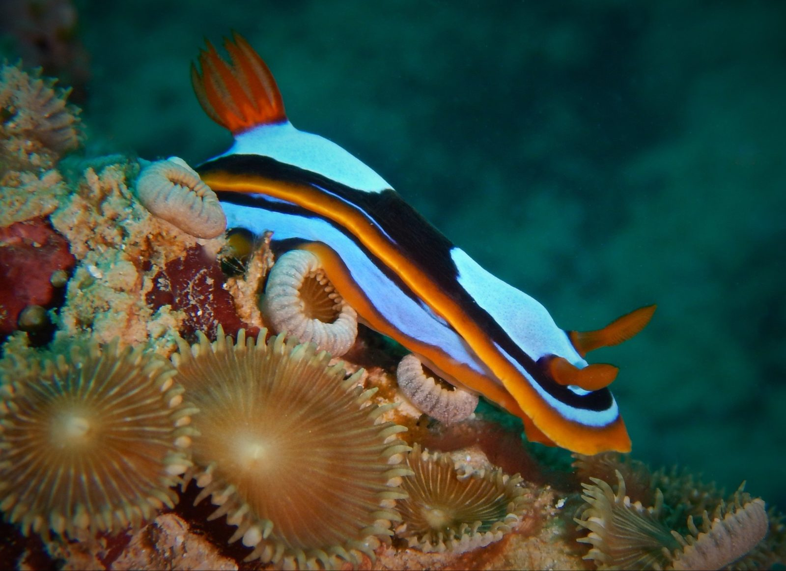Pilbara Dive and Tours, Western Australia