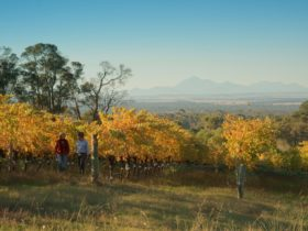 View from vineyard to the Stirling Range National Park