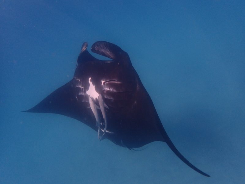 Project Manta Ningaloo Reef, Coral Bay, Western Australia