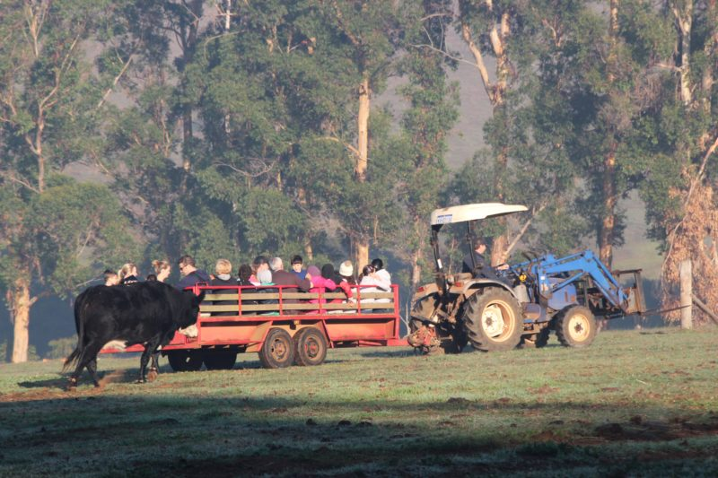 Pump Hill Farm Cottages, Pemberton, Western Australia