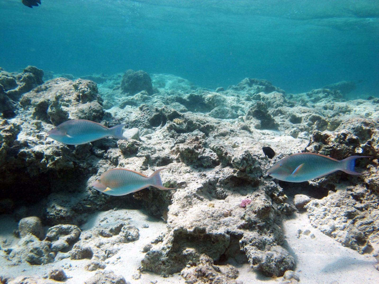 Purdy Point, Coral Bay, Western Australia