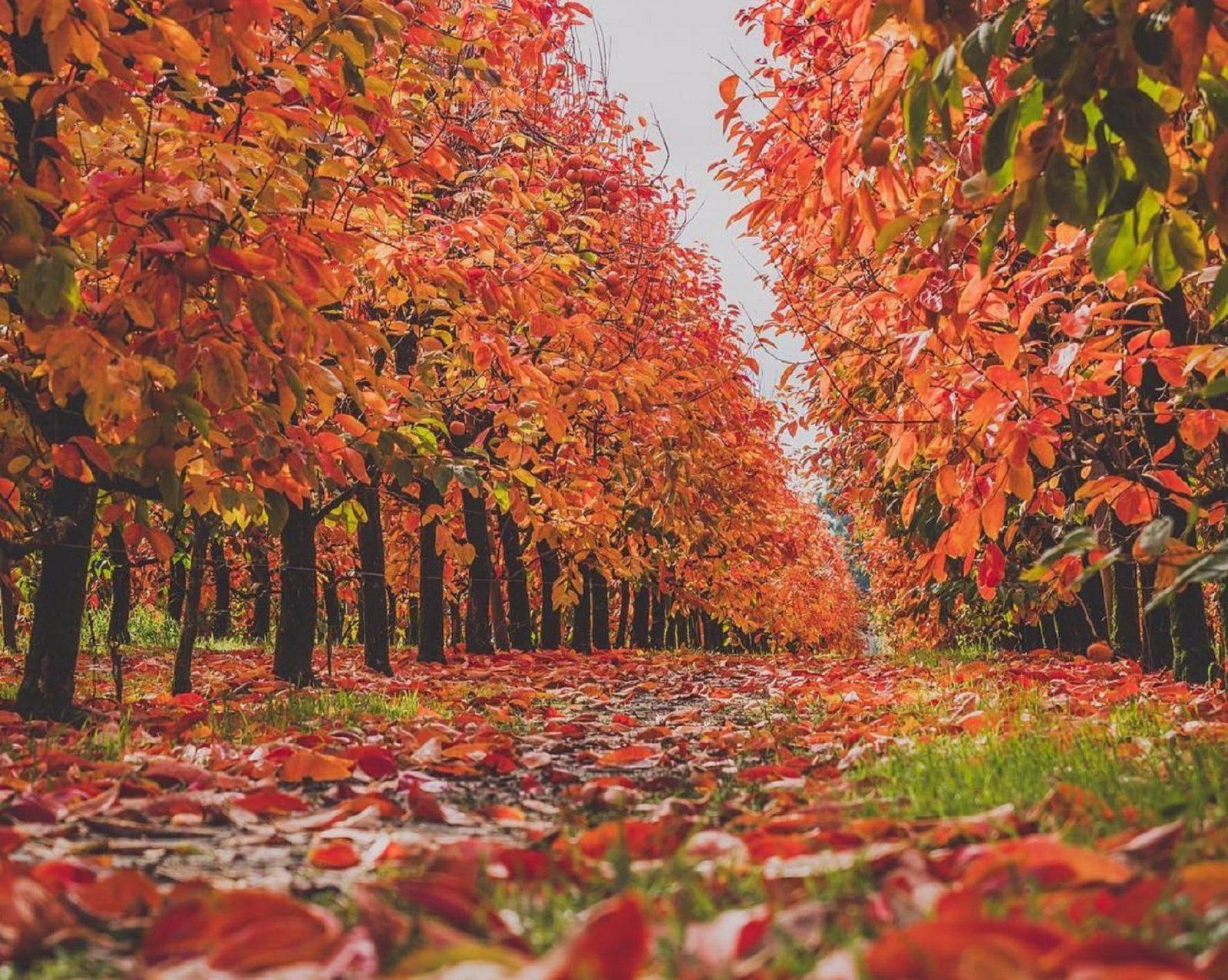 Raeburn Orchards, Roleystone, Western Australia