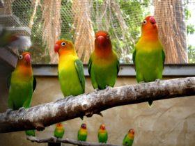 Rainbow Jungle The Rainbow Jungle The Australian Parrot Breeding Centre, Kalbarri, Western Australia