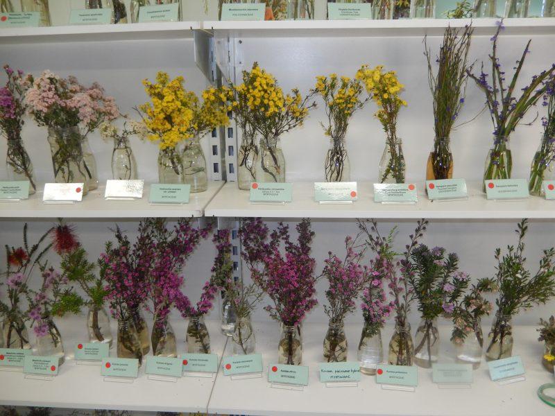 Ravensthorpe Wildflower Show and Spring Festival, Ravensthorpe, Western Australia