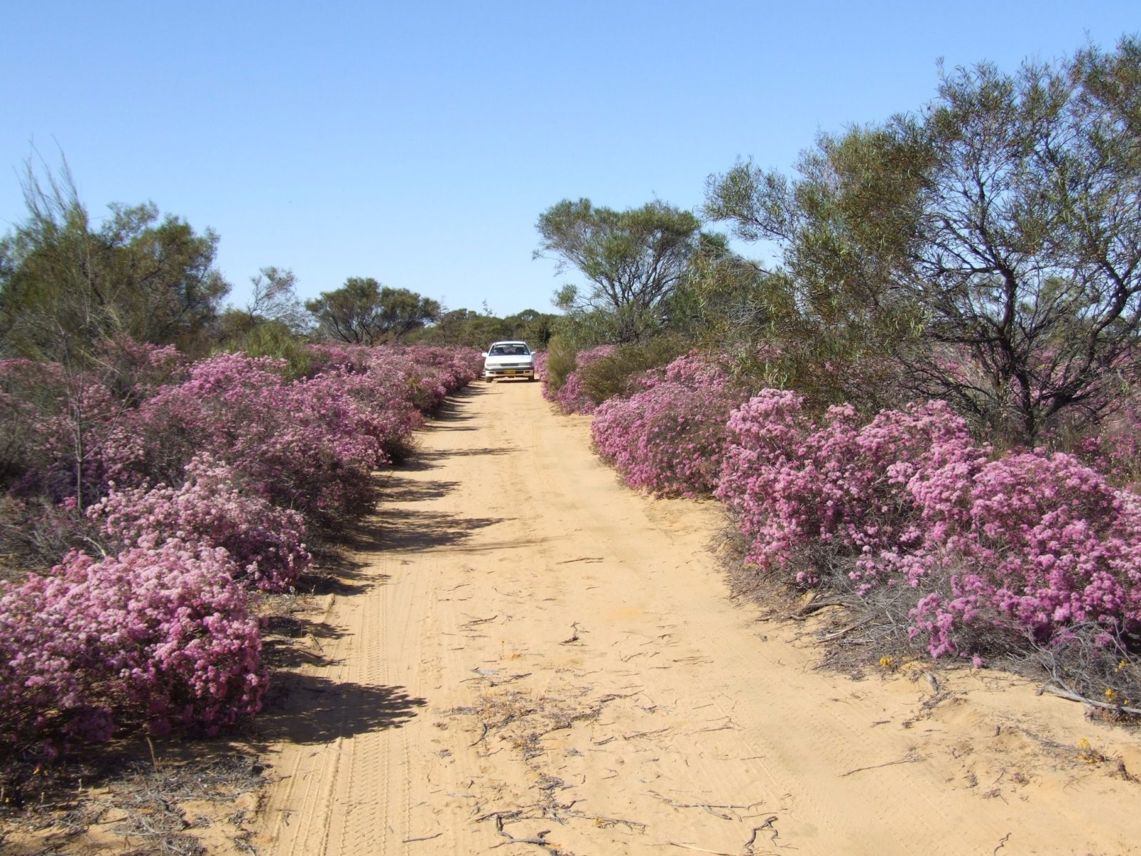 Reynoldson's Flora Reserve, Wongan Hills, Western Australia