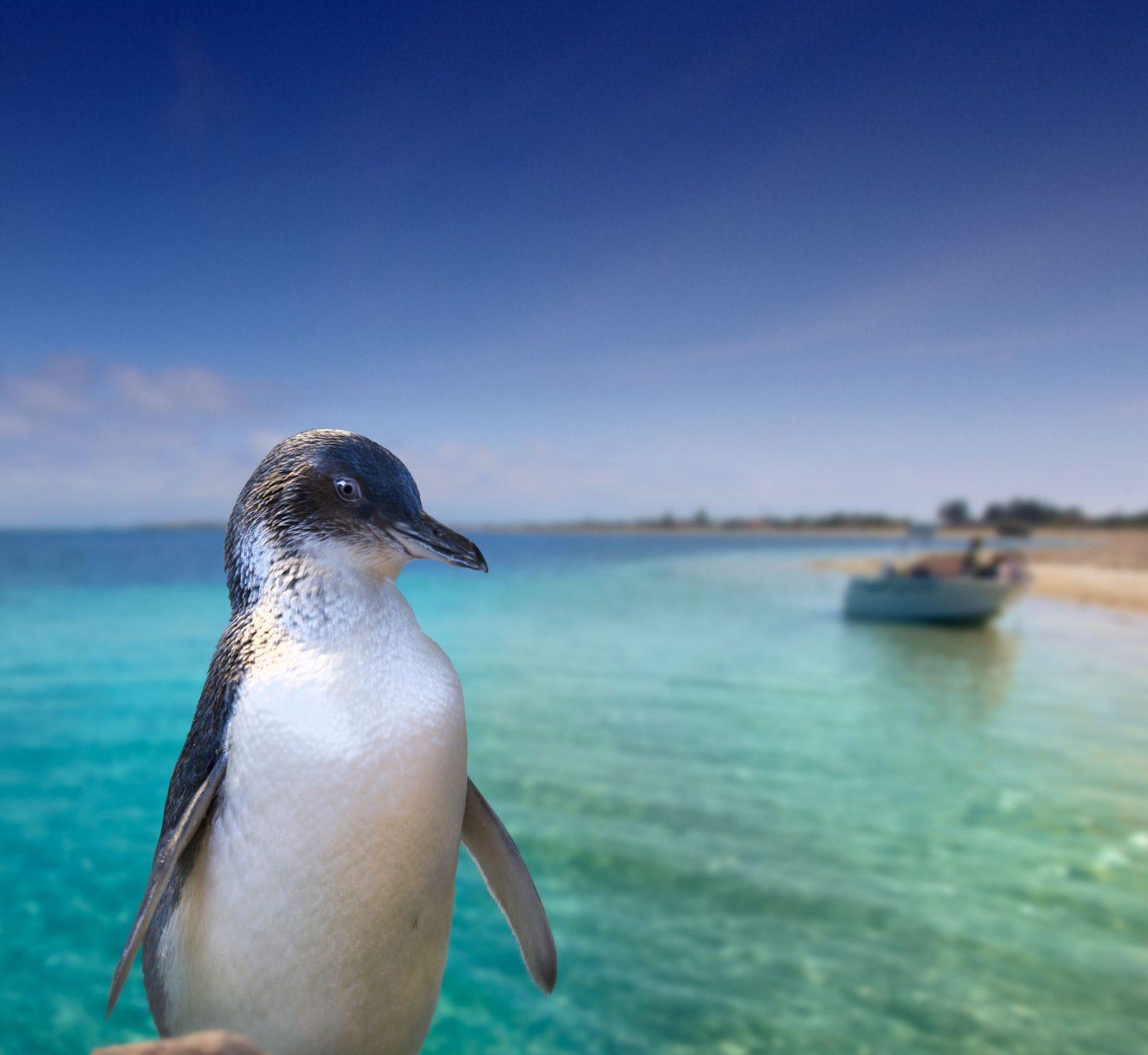 Rockingham Wild Encounters - Penguin Island Ferry and Cruises, Rockingham, Western Australia