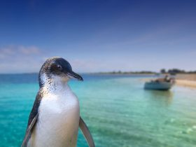 Rockingham Wild Encounters - Penguin Island Ferry and Cruises, Rockingham, Western Australia