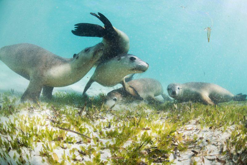 Sea Lion Charters, Jurien Bay, Western Australia