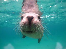 Seal Cove, Albany, Western Australia