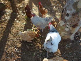Settlers Rest Farmstay Swan Valley, Western Australia