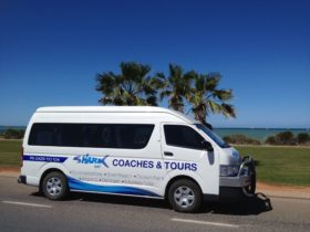 Shark Bay Coaches and Tours, Denham, Western Australia
