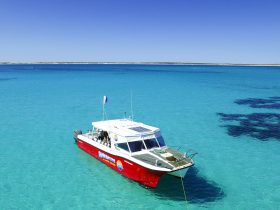 Shark Bay Dive and Marine Safaris, Shark Bay, Western Australia