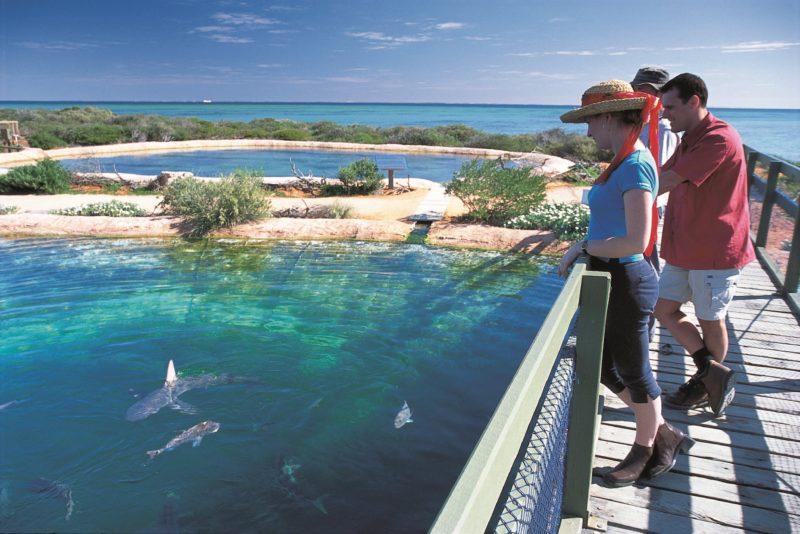 Shark Bay Marine Park, Denham, Western Australia