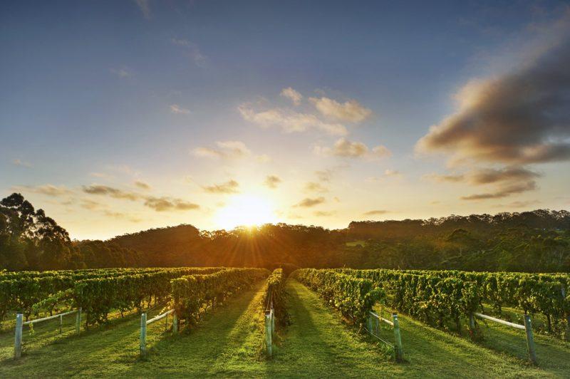 Singlefile Wines, Denmark, Western Australia