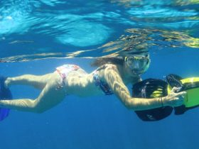 Snorkel Ningaloo, Exmouth, Western Australia