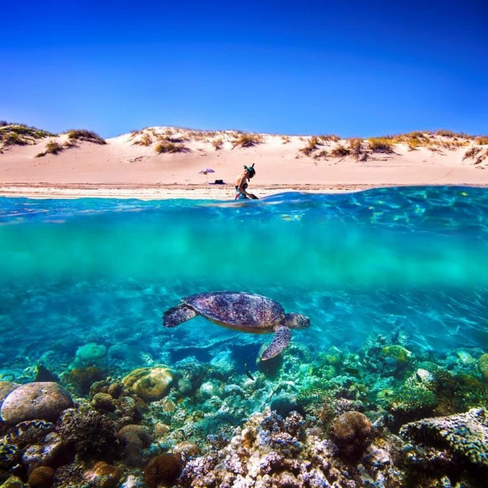 Snorkel the Ningaloo Reef, Exmouth, Western Australia