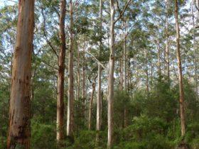 Southern Flora, Bridgetown, Western Australia