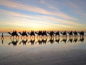 Sundowner Camel Tours, Broome, Western Australia