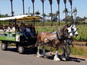 Swan Valley Wagon Tours, West Swan, Western Australia