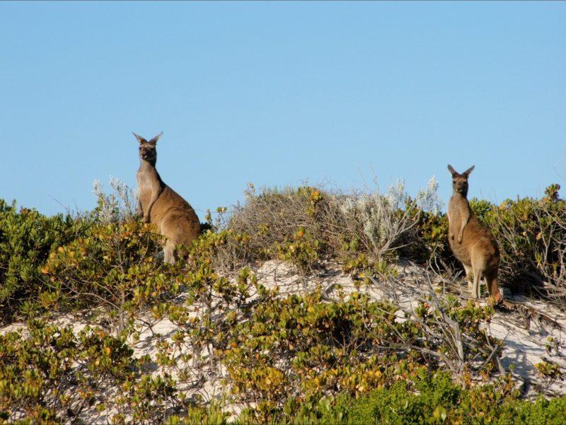 Tailored Treks, Lancelin, Western Australia