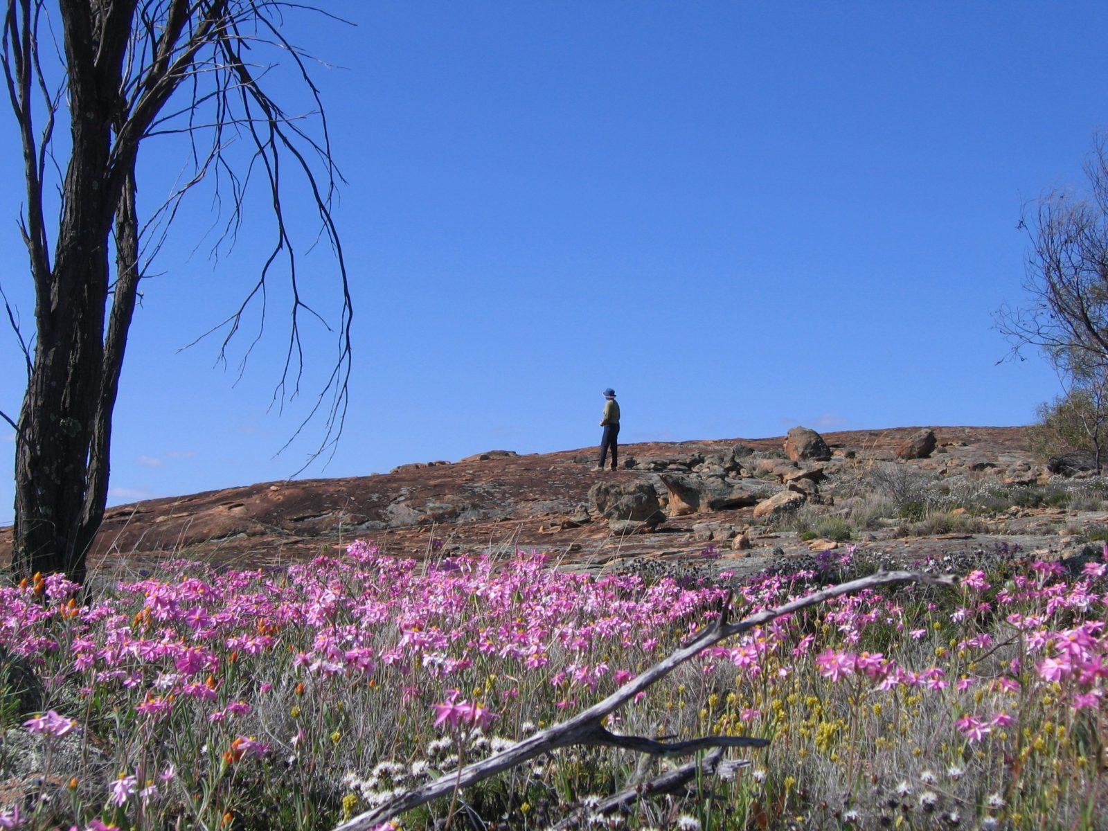 Talgomine Reserve, Nungarin, Western Australia