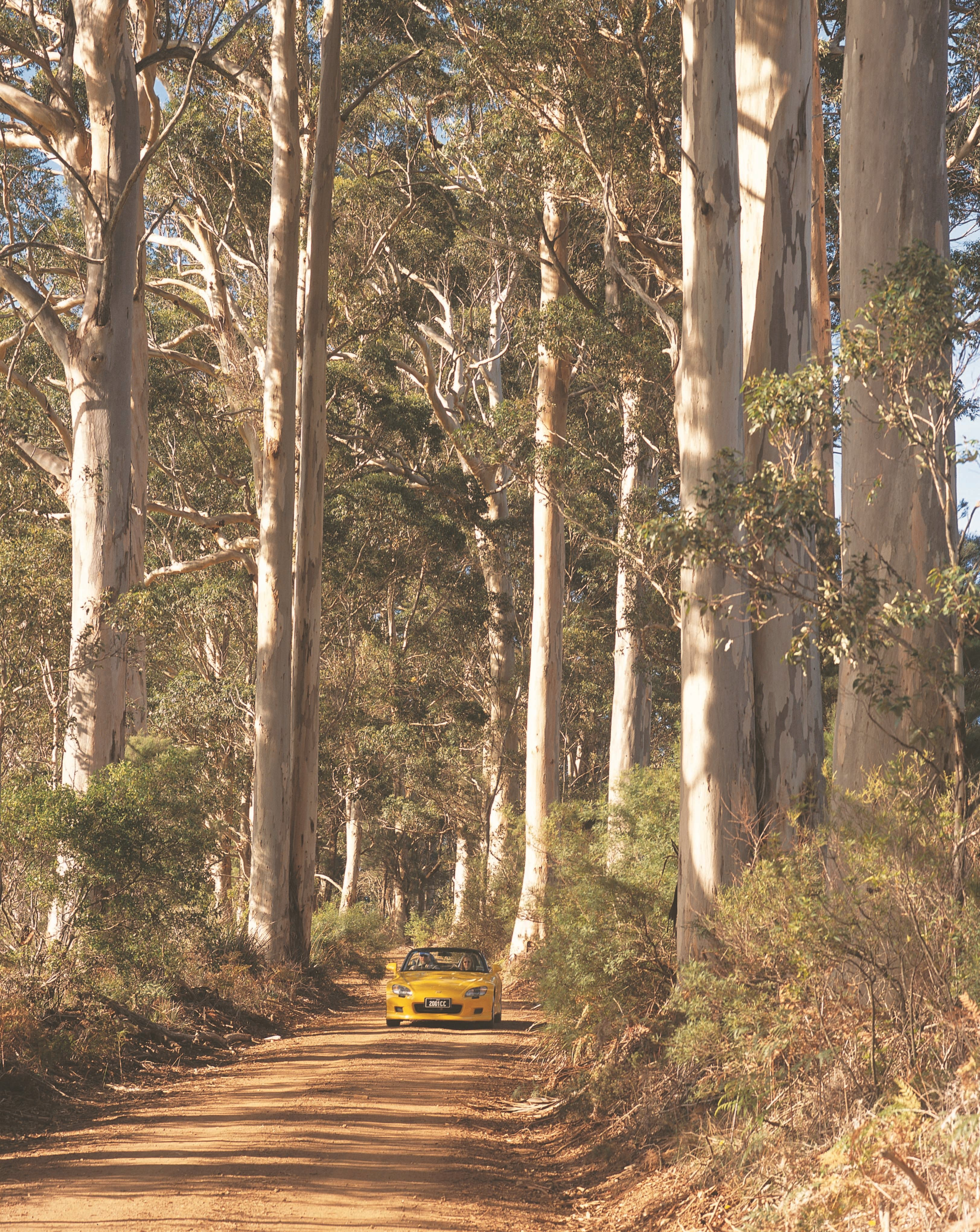The Great Forest Trees Drive, Pemberton, Western Australia