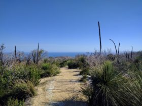 The Munda Biddi Trail, Albany, Western Australia