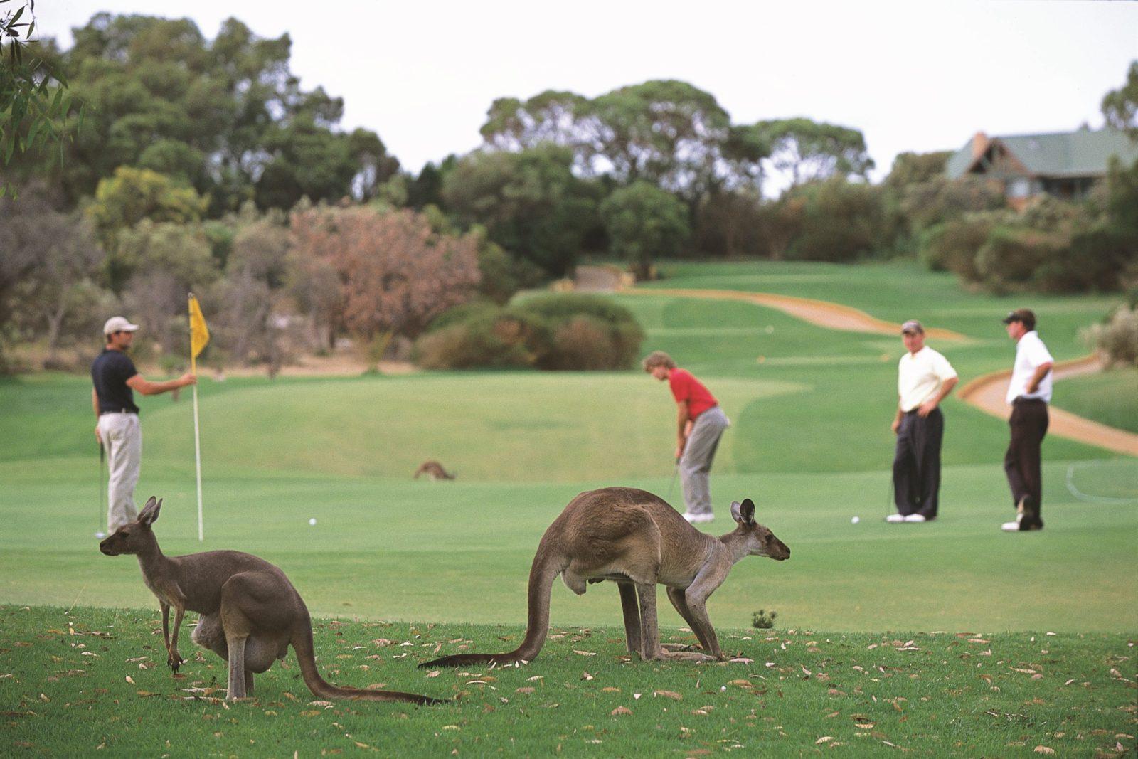 The Vines, Western Australia