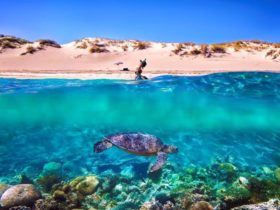 Warlu Way, Exmouth, Western Australia
