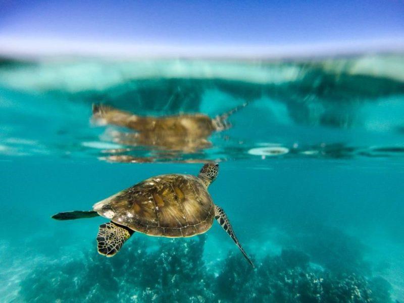 Turtle Nesting Season, Exmouth, Western Australia
