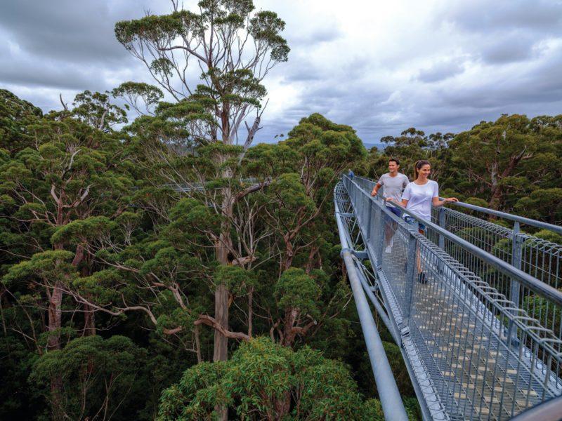Valley of the Giants, Tree Top Walk , Western Australia