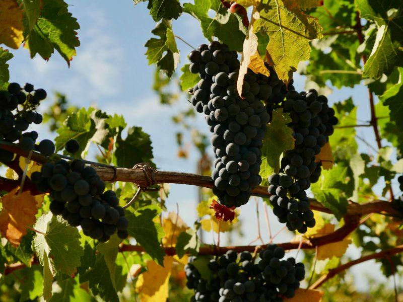 Victory Point Wines, Cowaramup, Western Australia