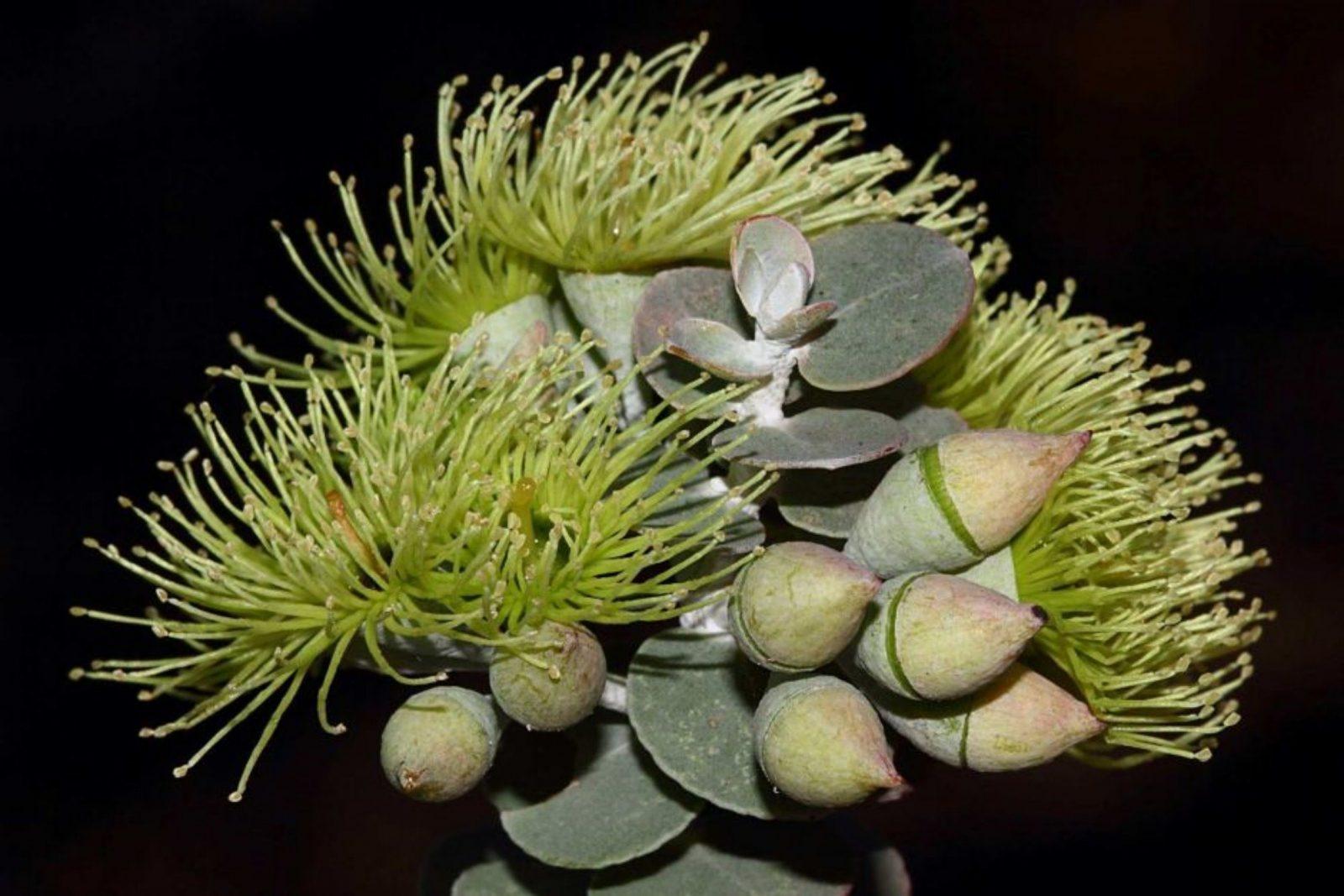 WA Herbarium, Perth, Western Australia