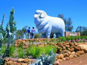 Wagin, Western Australia