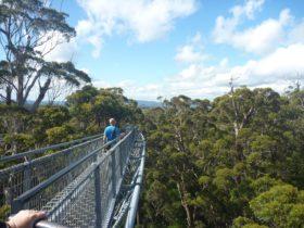 Walpole-Nornalup National Park, Walpole, Western Australia