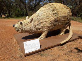 Wara Art - York Trail, York, Western Australia