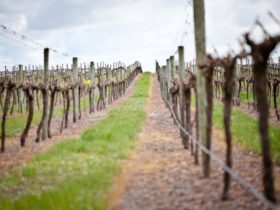 West Cape Howe Wines, Denmark, Western Australia