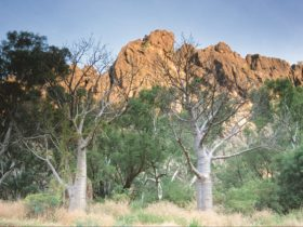 Windjana Gorge National Park, Derby, Western Australia