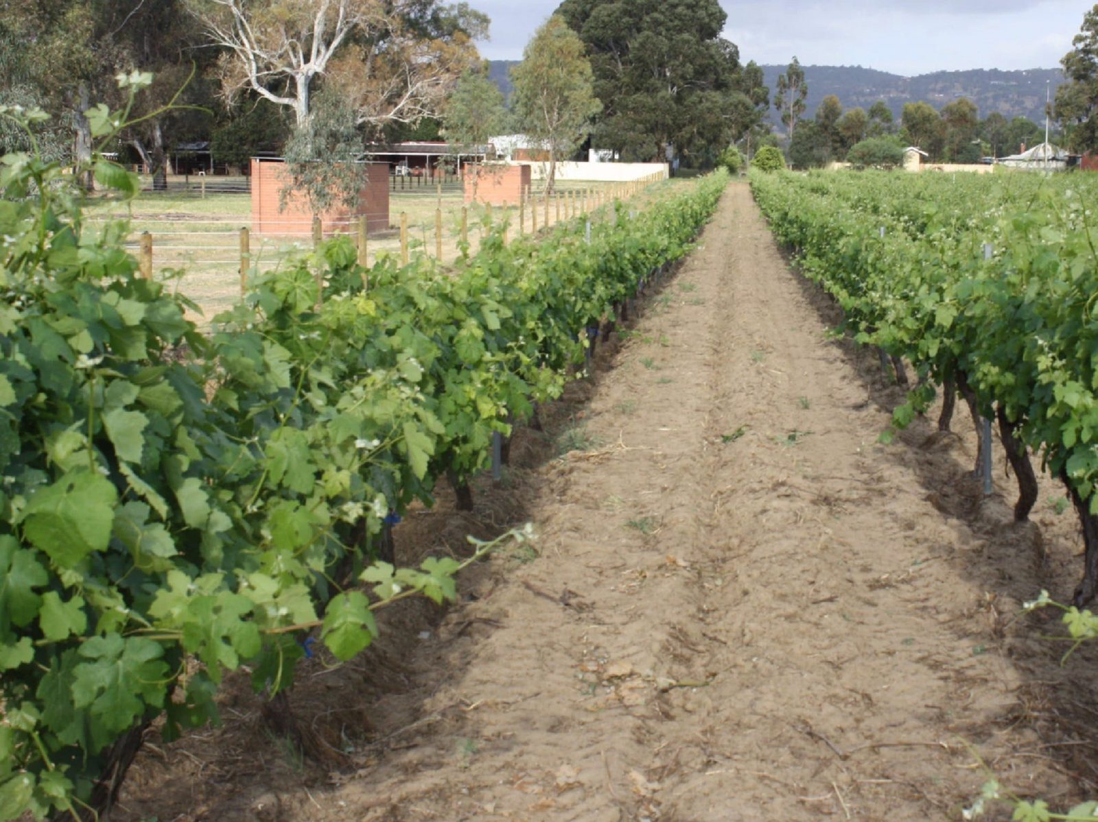 Wine Tour and Tasting, Baskerville, Western Australia