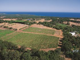 Wise Vineyard Restaurant, Dunsborough, Western Australia